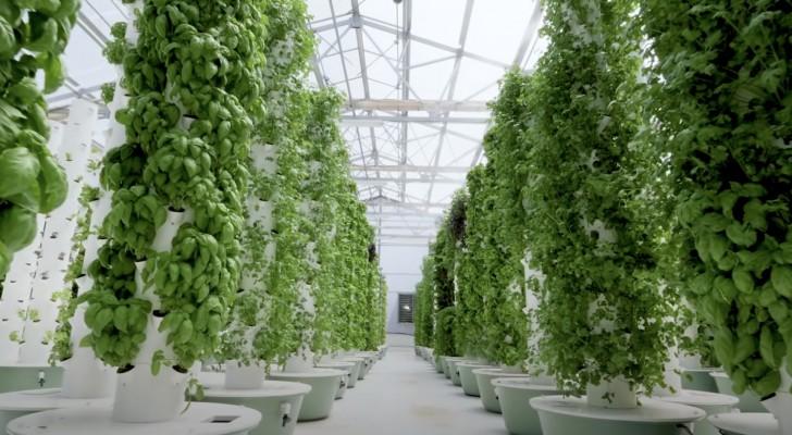Aeroponische Landwirtschaft: die innovative Technik des Anbaus ohne Erde