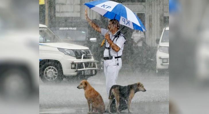 Un policía de tránsito comparte su paraguas junto a dos perros callejeros: quería protegerlos de la fuerte lluvia
