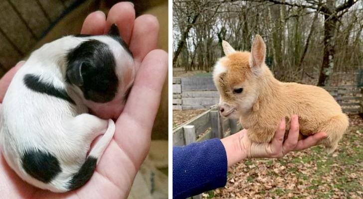 Einfach bezaubernd: 16 Tierbabys, die unser Herz vor Niedlichkeit zum Schmelzen gebracht haben