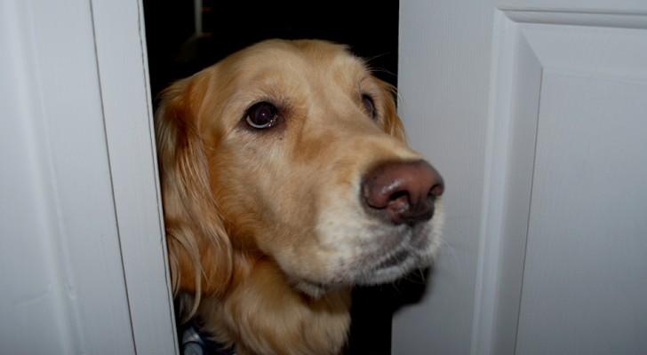 En hund förstår att hans husse inte mår bra, lyckas låsa upp ytterdörren och räddar hans liv