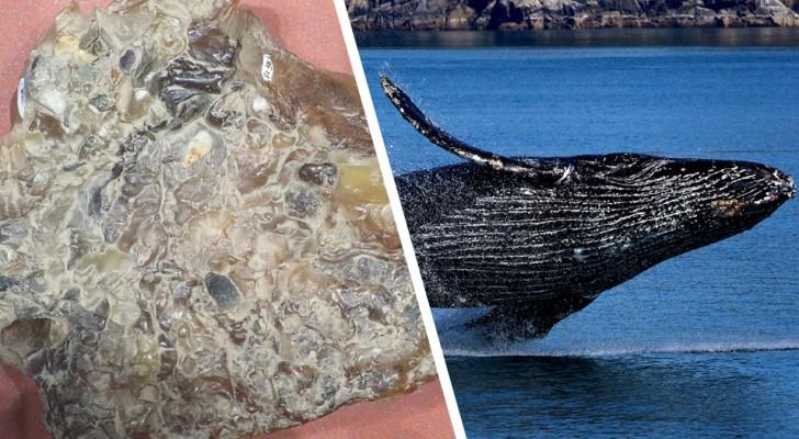 Visser vindt groot blok walviskots: Het is als drijvend goud, 1 miljoen euro waard
