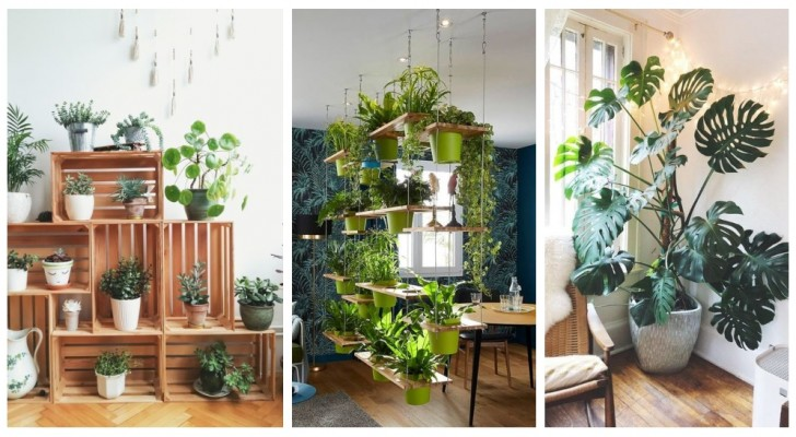 Sfrutta la bellezza delle piante per decorare la casa con un irresistibile tocco di verde