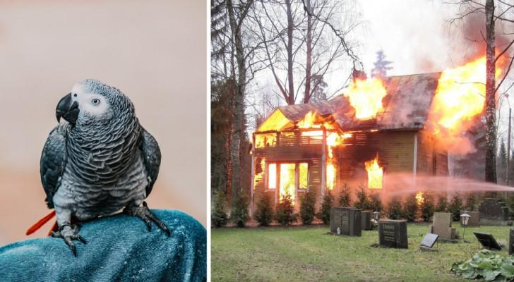 Pappagallo sveglia il suo padrone durante la notte e lo salva dalla casa che stava andando in fiamme