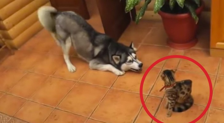 He would love to play ... but his friend's reaction leaves no doubts !