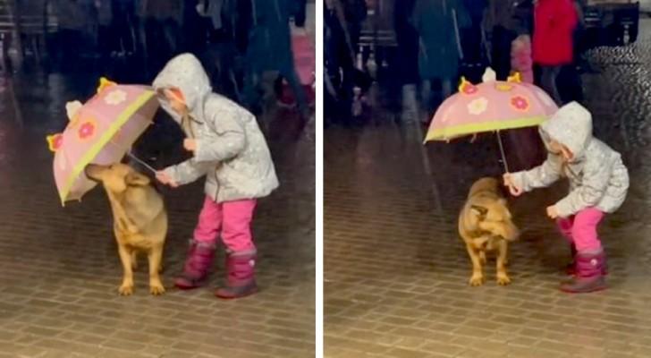 Une petite fille décide de protéger son chien de la pluie battante avec son parapluie : les photos sont adorables