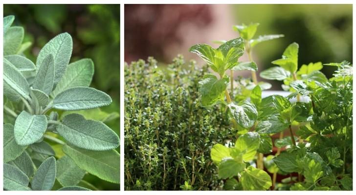 Erbe aromatiche in autunno: quali gustare ancora e come prendersene cura