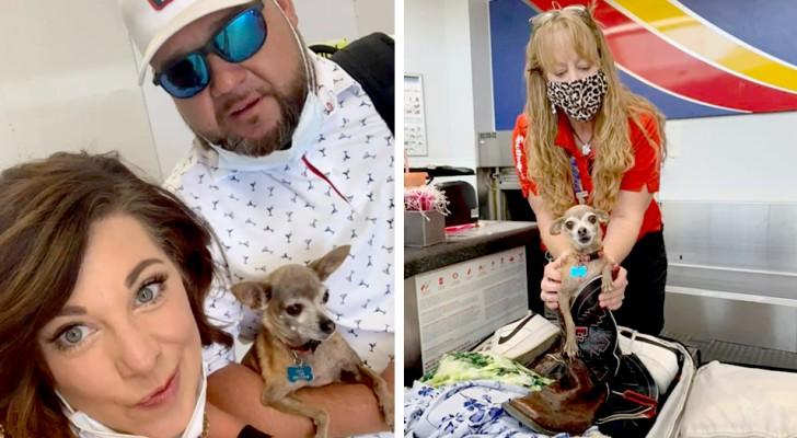 Questo chihuahua si è nascosto nella valigia dei padroni perché voleva andare in vacanza con loro