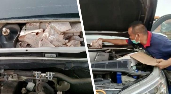 Uomo nasconde 1.300$ nell'auto di sua moglie: dopo qualche ora scopre che i topi glieli hanno mangiati