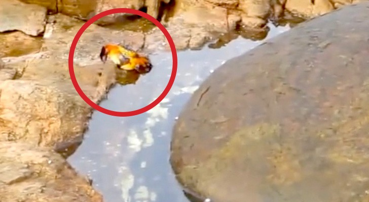 She's filming a crab, but what happens shortly after is so SCARY !