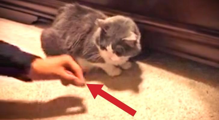 Ze probeert een beloning aan haar kat te geven, maar er gebeurd elke keer iets hilarisch