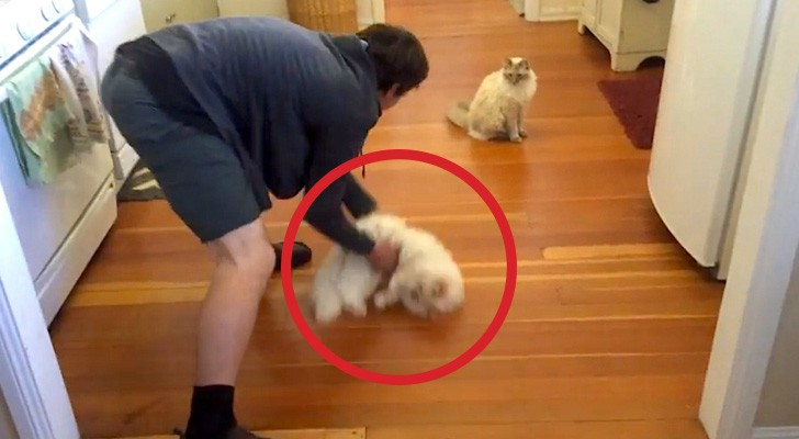 He slides his cat along the floor ... His reaction? Adorable!