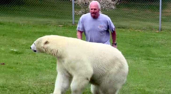 Een man achtervolgt een ijsbeer... de manier waarop de ijsbeer reageert is verbazingwekkend!