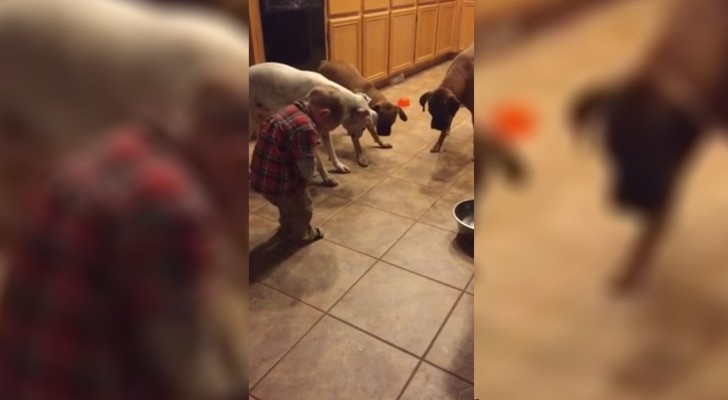 Een kind maakt plezier met drie honden: wat ze doen is echt grappig