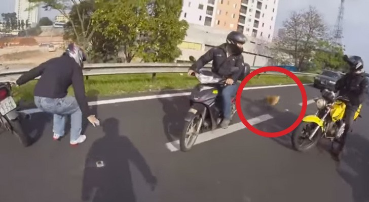Alguns motociclistas encontram um cão no meio de uma estrada: a sua ajuda é vital