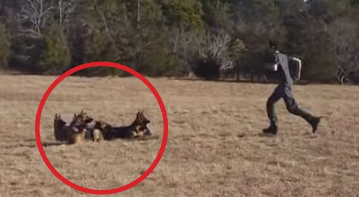 Ordena a sus perros de estar quietos en el prado. Lo que hace poco despues es sorprendente