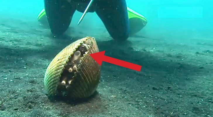 Sembra un normale mollusco, ma guardate chi si nasconde all'interno...