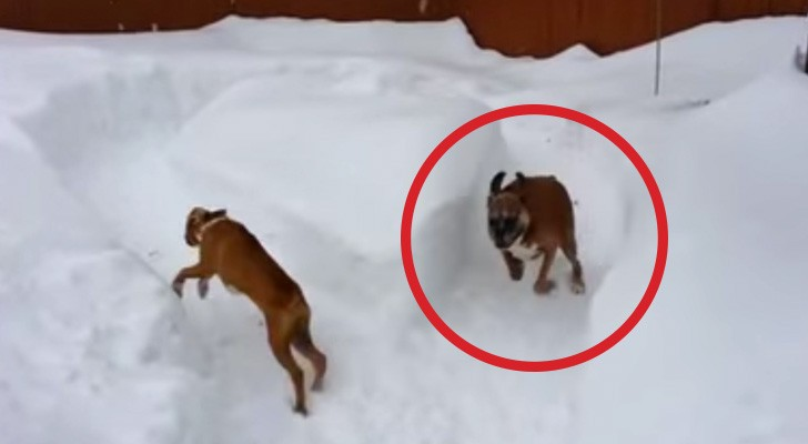 Skämtet som den äldre hunden gör åt valpen kommer att ge er gapskratt!