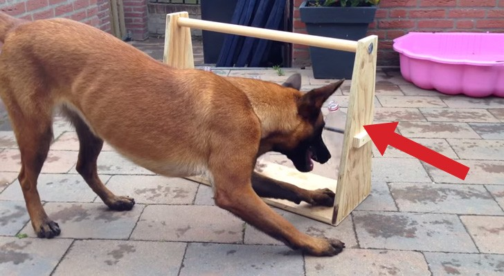Here's a simple and BRILLIANT game that will keep your dog busy for hours !