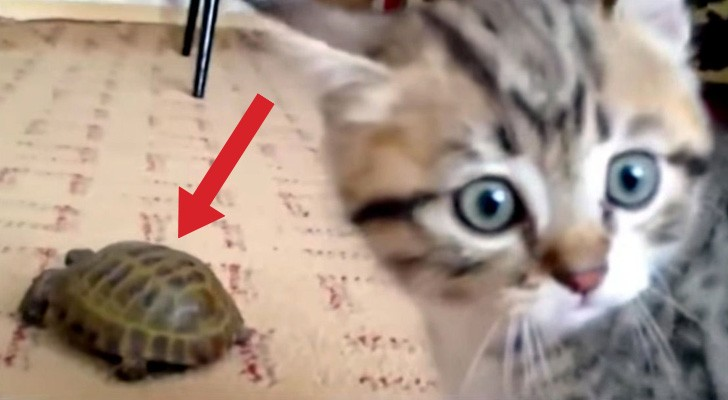 There's a new friend in the house... the reaction of this kitten is hilarious !
