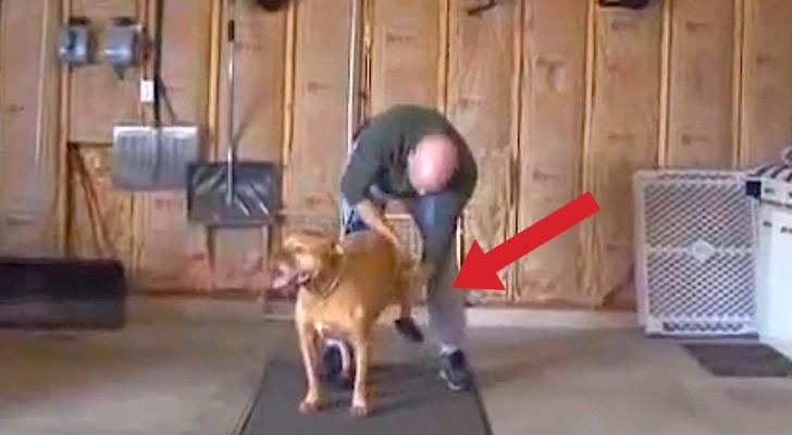 Ce que cet homme pour son chien est vraiment SPÉCIAL!
