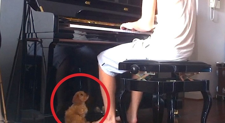 Han sätter sig vid pianot, men se på hundens reaktion