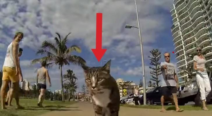 O jeito que este gato passeia pela cidade deixa todo mundo de boca aberta