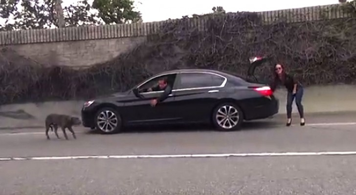 Una macchina si ferma sulla superstrada: qualcuno ha un disperato bisogno di aiuto