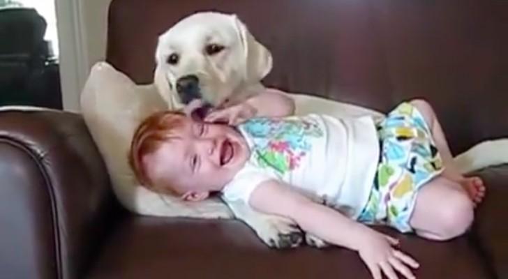 Der Hund liebkost sie als wäre sie ein Welpe... Ihre Reaktion wird euch zum Lachen bringen!