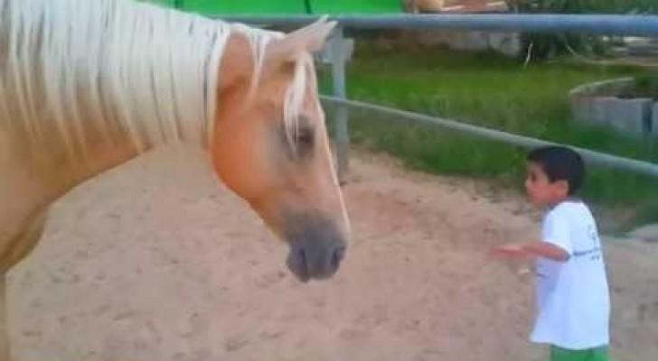 Ein Pferd nähert sich einem besonderen Kind: Was dann passiert, ist pure Emotion