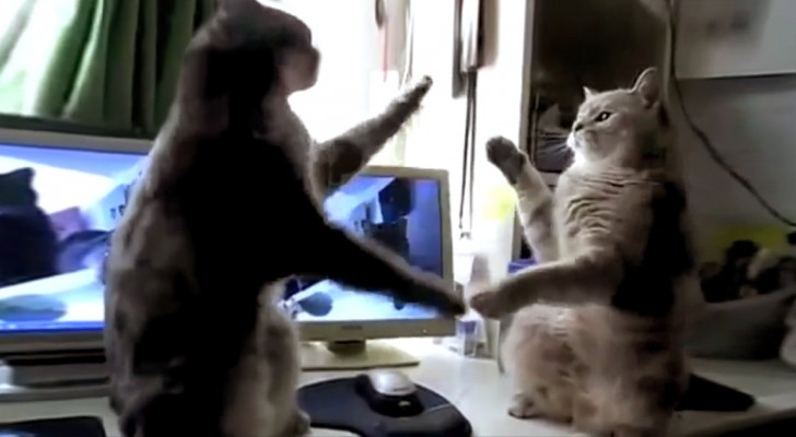 Inizia a filmare i suoi gatti: ciò che fanno vi farà morire dalle risate