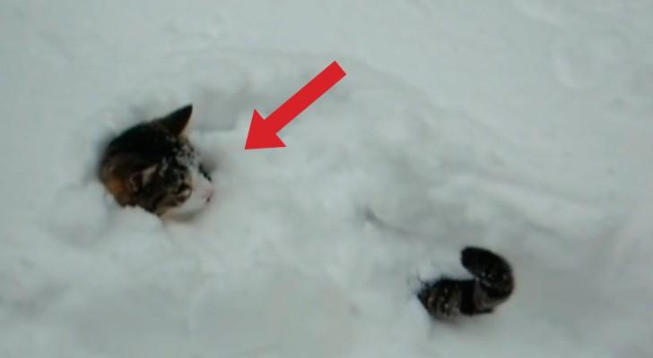2 chats jouent sur la neige, mais un d'eux fait quelque chose d'inattendu et HILARANT
