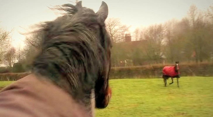 Diese Pferde waren für vier Jahre getrennt: Das passiert, wenn sie sich wiedersehen