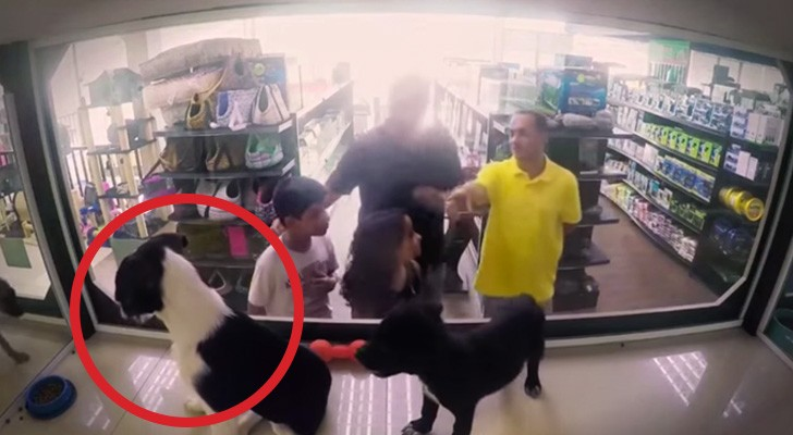 They replaced animals for sale with pets for adoption: here's the reaction of customers at the store