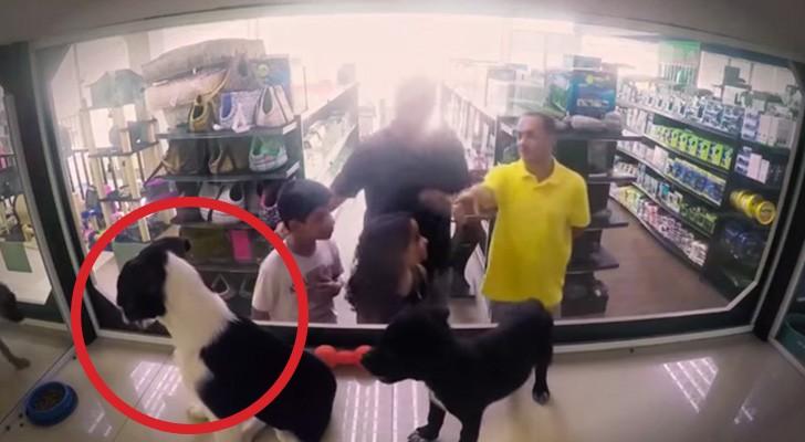 Ils échangent des chiens de race avec des chiens errants: voilà la réaction des clients
