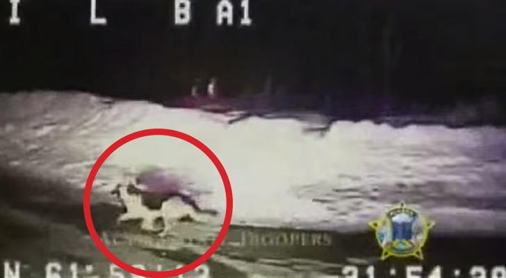 La police voit un chien dans un bois et décide de le suivre: la découverte est INCROYABLE