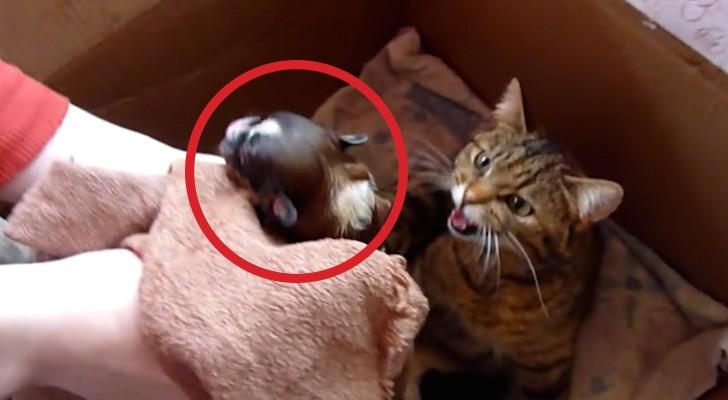 Colocam um cachorrinho no meio de um monte de gatinhos recém-nascidos: a reação da mãe é espetacular!