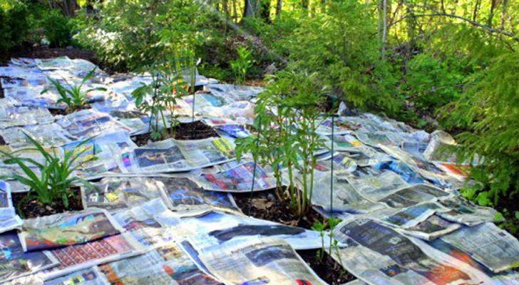 Sie legt Zeitungspapier im Garten aus: Ein günstiger Trick, der Zeit spart!
