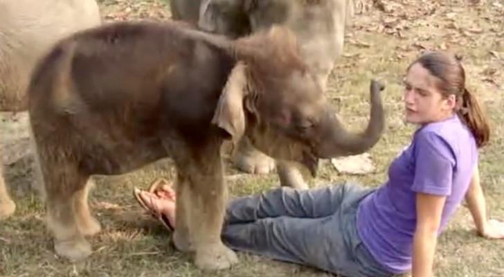Si siede davanti a degli elefantini... Ciò che fa il più piccolo è esilarante!