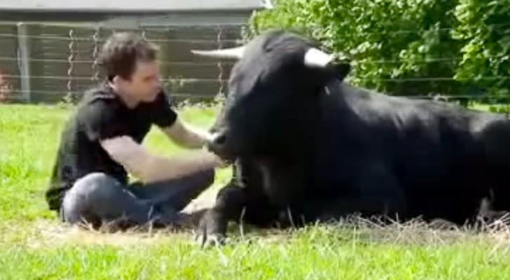 Il a sauvé ce taureau de la corrida: leur amitié va vous surprendre