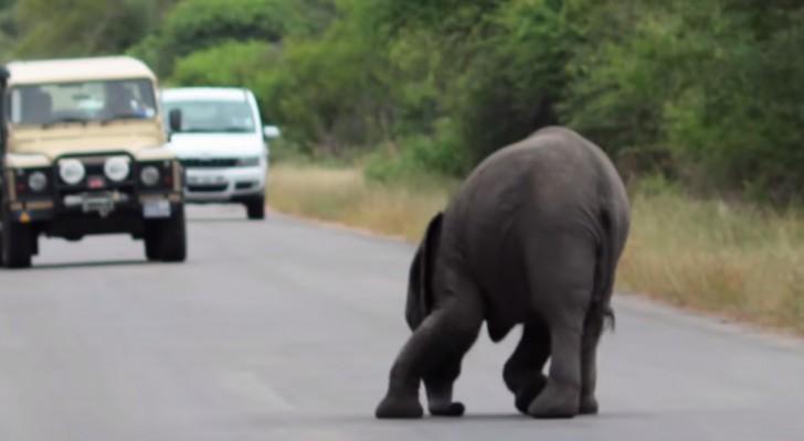 Ein Elefant wird mitten auf der Straße ohnmächtig: Die Reaktion seiner Familie unvergleichlich