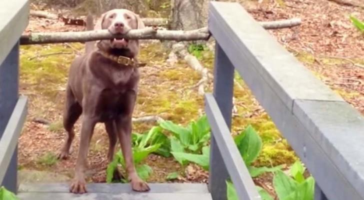Il essaie de passer le pont avec son bâton... la conclusion est hilarante!