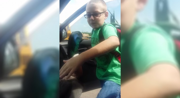 A duck waits his friend after school ... The way he greets him is awesome !