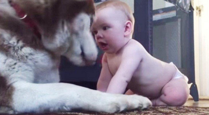 Il neonato gli si avvicina e lo stuzzica: la reazione del cane vi strapperà un sorriso
