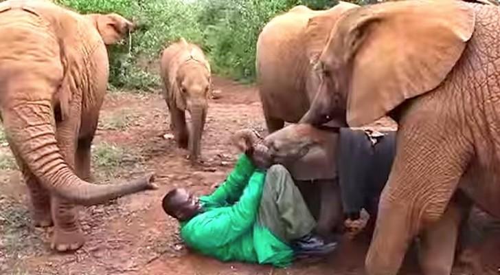 Een doodsbang babyolifantje is verlaten door zijn moeder: in deze video ontmoet hij zijn  nieuwe FAMILIE!