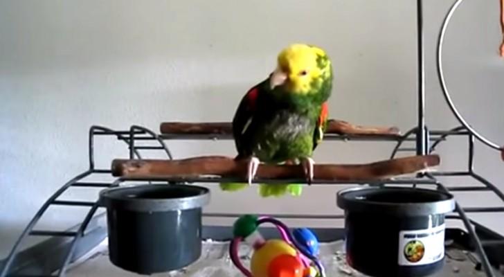 Ein Neugeborenes kommt zuhause an. Was der Papagei macht, ist unglaublich