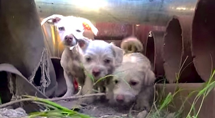 Ils sont appelés pour sauver des chiens errants mais ils vont trouver une famille entière!