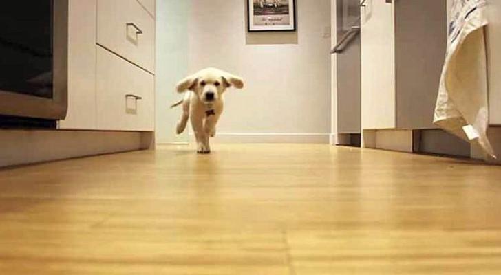 Il prépare le repas à ses deux chiens : leur course vers la cuisine est IRRÉSISTIBLE!