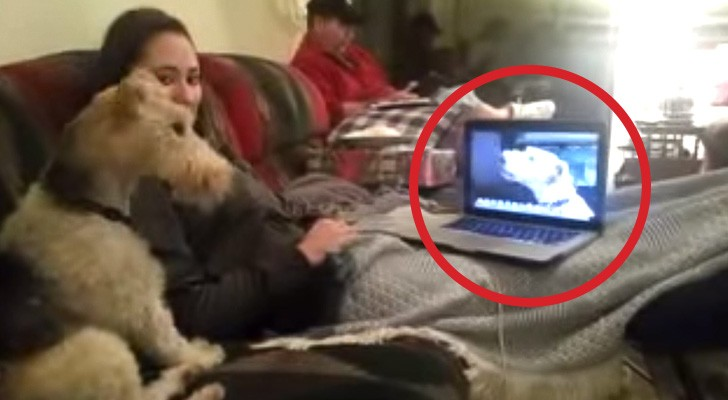 Two dogs are in the middle of a Skype conversation: you will not believe what you're about to see!