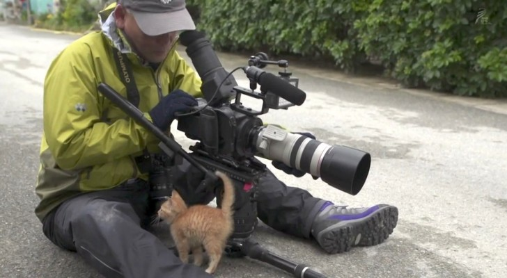 A stray kitten approaches a photographer: what happens shortly after is priceless