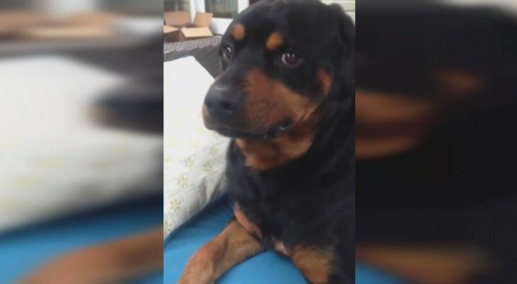 Als hij vraagt of zijn hond een bepaald gezicht wil trekken, reageert de hond hier onmiddellijk op!